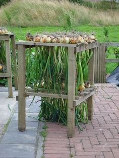 Onion Drying Rack -use a dowel in the slat gaps if onions are too small and fall… - Modern Herb Drying Racks, Drying Herbs, Drying Onions, Vegetable Garden, Garden Plants, Pig Farming, The Ranch, Farm Life, Gardening Tips