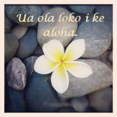 Ua ola loko i ke aloha Love gives life within Aloha Tattoo, Hawaiian Tattoo, Polynesian Islands, Hawaiian Islands, Wrist Tattoos, Arm Band Tattoo, Tatoos, Hawaii Quotes, Mahalo Hawaii