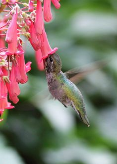 Hummingbird I feed them year round make sure you put all feeders out to welcome them they start migrating from the south an to the north an put out there favorite flowers like honeysuckle there are other flowers they like