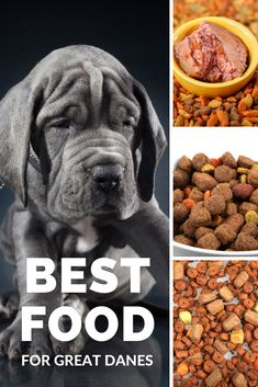 The best dog food for Great Danes (it's probably not what you think! Types Of Dog Food, Giant Dog Breeds, Great Dane Puppy, Best Dog Food, Aggressive Dog, Goldendoodle, Big Dogs, Dog Love, Free Food