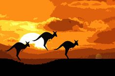 Back for it's sixth year, the iconic Australian Kangaroo at Sunset launches again - AgAuNEWS Animal Kingdom, Kangaroo, Moose Art, Product Launch, Sunset, Animals, Google Search, Baby Bjorn, Animales