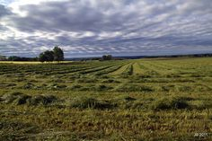....the smell of fresh cut hay.  [Day 7 - 5/26/2012]