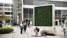 Ein Moos soll die Luftverschmutzung in Großstädten auffressen