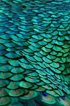 peacock | blue | teal | turquoise
