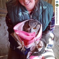 #Repost @joanielamoureux with @repostapp.  It's that time of the year again! #owlburrito #veryhappyowl