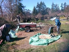 Peter's makin' mulch by shredding branches off the fallen Garry Oak