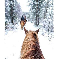 Huomenta, Rukalla on jo lunta! Miten kaunis ratsastusretki, kiitos @gia_matkakuume ❄️⛄️ #ruka #suomi #finland #winterwonderland #horses #mondolöytö #mondolehti