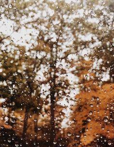 Who else loves a good autumn rain? Who else loves a good autumn rain?