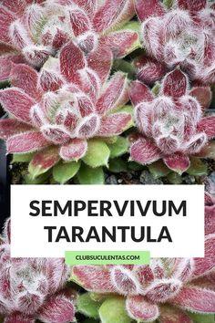 Planting Succulents, Garden Plants, Cactus Names, Weird Plants, Colorful Succulents, Cactus Y Suculentas, Plant Care, Bonsai, Texture
