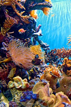 Coral Reef Animals and Plants Coral Reef by Ceardach Life Under The Sea, Under The Ocean, Sea And Ocean, Fish Ocean, Underwater Creatures, Underwater Life, Ocean Creatures, Colorful Fish, Tropical Fish