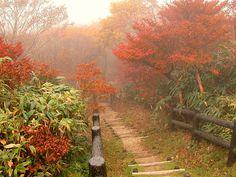 Soft Autumn landscape