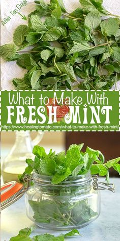 What to make with fresh mint? The best mint recipes all in one place What to make with fresh mint? The best mint recipes all in one place Herb Recipes, Vegetable Recipes, Cooking Recipes, Thyme Recipes, Lunch Recipes, Drink Recipes, Salad Recipes, Growing Mint, Growing Herbs