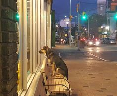 Faithful dog waits patiently for its owner to finish shopping