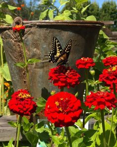 What's cheerier than a summer-flowering annual? Now's the time to add those pops of color to your containers and perennial beds.