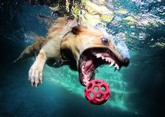 Photography- Dogs Under Water by Seth Casteel