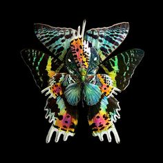 Mimesis – When colorful butterfly wings are turned into beautiful flowers (image)