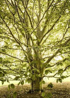 Tree of Life--Fine Art Nature photo. $20.00, via Etsy.