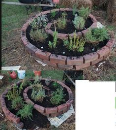 Design of a Spiral herb garden planting idea.    garden bed, garden edge