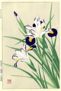 Kawarazki Shodo 'Iris' 1954
