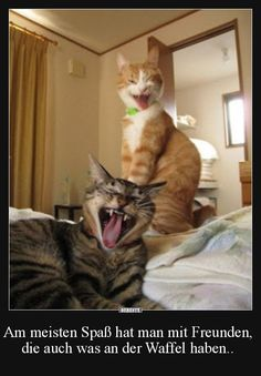 Two cute cats wrestling in bed! Screaming Yeah Baby it's Friday! Thank God It's Friday! Let the week end begin! I'm ready for rest and relaxation Funny cute Funny Animal Pictures, Funny Animals, Cute Animals, Funniest Animals, Party Animals, Crazy Cat Lady, Crazy Cats, I Love Cats, Cute Cats