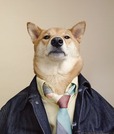 Earlier this year, we enjoyed some of the trendy fashions and model-like poses of Menswear Dog (MWD). Well, the adorable NYC-based Shiba Inu has been busy Jamie Chung, Shiba Inu, Menswear Dog, Dog Presents, Guys Be Like, Dog Training, Corgi, Cute Animals, Puppies