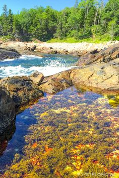 Lower Great Head Trail in Acadia National Park Maine - on ASpicyPerspective.com #travel