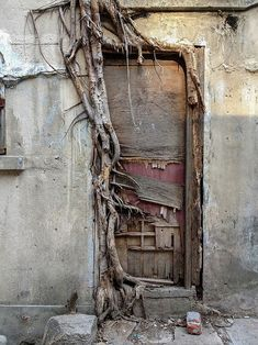 Tree roots are vast and intricate systems. These photos prove tree roots can put up a good fight against concrete. Cool Doors, Unique Doors, The Doors, Windows And Doors, Panel Doors, 10 Tree, When One Door Closes, Photo Images, Door Gate