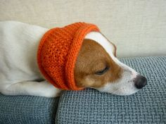 For Macy's ears in wintertime ... perhaps in a different color?