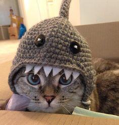 Nala's Handmade crochet shark hat | Nala Cat. (dal berretto di pelo... al berretto per il peloso...)