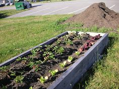 That Bloomin' Garden: Tsawwassen First Nation Community Garden is Born!