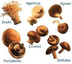 variety mushrooms - Google zoeken