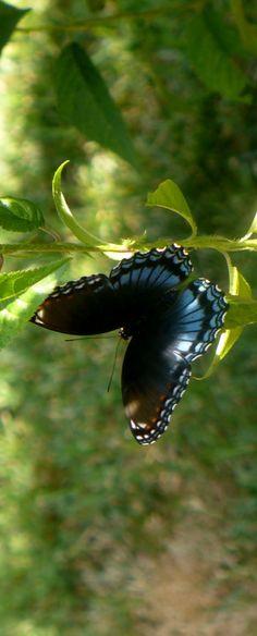 # butterfly #
