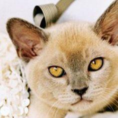 cute yellow eyes