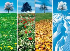 Changing Seasons Changing seasons are our guide to change, Dynamism conquering the static boredom. Four Seasons Art, Seasons Of The Year, Seasons Activities, Weather Seasons, Science And Nature, Autumn Summer, Fall Winter, Beautiful Landscapes, Montessori