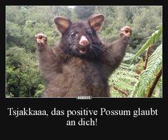 Tsjakkaaa, das positive Possum glaubt an dich! | Lustige Bilder, Sprüche, Witze, echt lustig