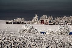 A frosted up farm near Sexsmith Alberta! - famous_amos_photography A frosted up farm near Sexsmith Alberta! #travelalberta #travelcanada Read more at http://websta.me/n/famous_amos_photography#uDMuXDEos69XJ0dw.99