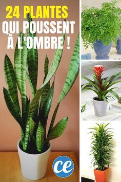 Vous cherchez des plantes d'intérieur qui poussent à l'ombre voir même dans le noir ? comment-economiser.fr a sélectionné pour vous 24 belles plantes qui poussent sans lumière de soleil ou qui n'ont pas besoin de lumière dans la maison ou l'appartement. #plantesquipoussentalombre