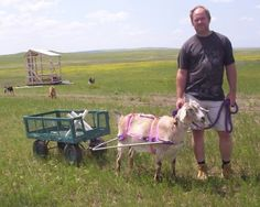 Goatvet likes this sensible advice about training a goat to pull a wagon