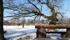 #iceskating #nature #wintertime #ice #dnescestujem #takjsmetady #trebon #czechnature #rybniksvet #bohemia #czech #tree #wintersport