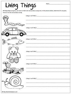 Characteristics Living Things Worksheet 2 - Sort | Worksheets ...