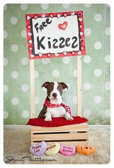 Pet Photography / Prop Ideas ♥ Puppy Love