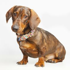 Collar modelo Diamante de Pepito&Co Dogs, Collar, Animals, Wonderland, Nice, Model, Cute Photos, Animales, Animaux