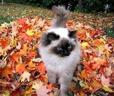 Autumn_kitten1_medium.JPG - mrichie1