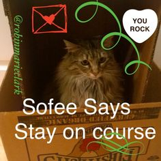 Sofee Says: Stay on Course