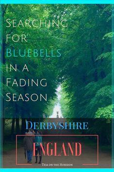 Looking for bluebells | Derbyshire | England | Peak District