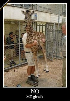 No My Giraffe | Click the link to view full image and description : )