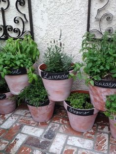 Kitchen herb potted garden