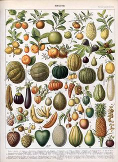 Fruit  and Vegetables Melons Gourds Tomato Eggplant  French 1898-1904 Antique Print Nouveau Larousse. $15.00, via Etsy.