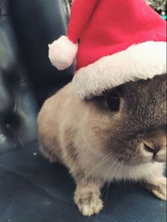 Arrgghh having a wonderful bunny filled day today :) Merry Bunmas Everyone