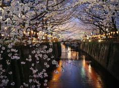 Cherry Blossoms, Nakameguro, Tokyo, Japan | Photograph by Giovanni Pascarella, National Geographic Your Shot | source: http://photography.nationalgeographic.com/photography/photo-of-the-day/cherry-blossoms-nakameguro/
